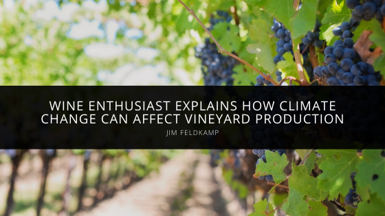Wine Enthusiast Jim Feldkamp Explains How Climate Change Can Affect Vineyard Production